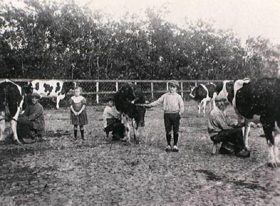 Arend Vreugdenhil Monsterseweg nr. 23, koeienbocht achter Madestein. Onder de koe rechts: Nicolaas Vreugdenhil; staande naast de middelste koe: Arend Vreugdenhil, zoon van Teun V.; het meisje is Annie Boetes, dochter van een onderwijzer aan de lagere school.